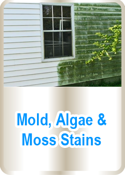 Mold, Algae & Moss Stains